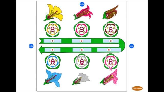 MasterTool - Biologie - Evolution und Verhalten (83) | co.Tec